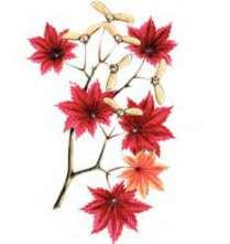 Растения Красной книги – Красная книга – кратко описание, фото