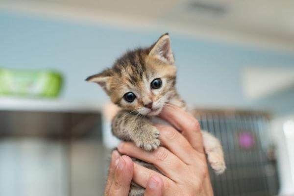 Как определить сколько месяцев котенку  возраст, фото - Это интересно