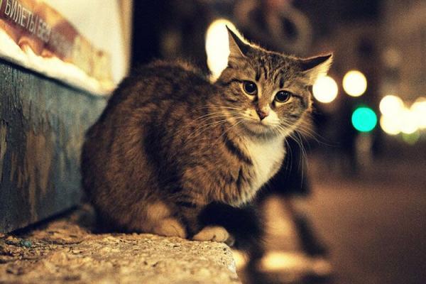 Куда можно отдать бездомную кошку  в какое место сдать, пристроить, что делать - Это интересно