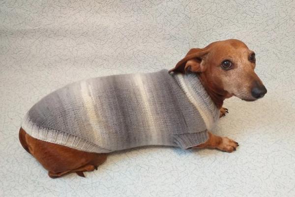 Как связать свитер для собаки  спицами, для начинающих, схемы, крючком - Это интересно