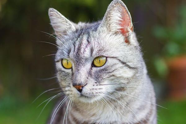 Как назвать серую кошку девочку красиво  как можно, кличка - Это интересно