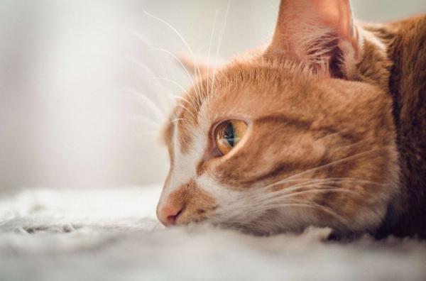 Плачут ли кошки и почему  слезами - Это интересно