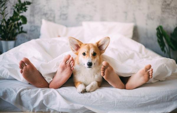 Можно ли брать собаку в постель: почему любят и почему нельзя спать - Это интересно
