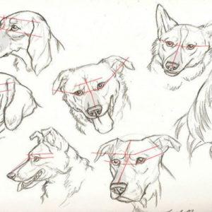 Как нарисовать морду собаки  карандашом, поэтапно, ребенку - Это интересно