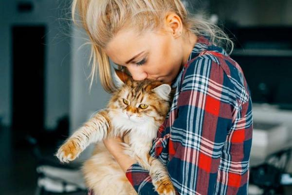 Почему люди любят кошек  почему нравятся коты - Это интересно
