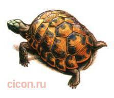 Средиземноморская черепаха – Красная книга – кратко описание, фото