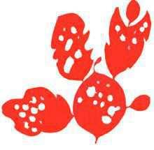 Пальмария четковидная – Красная книга – кратко описание, фото