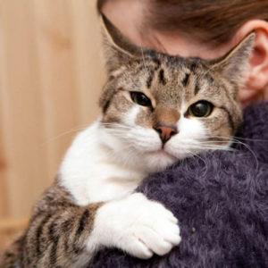 Как показать кошке, что ты ее любишь  как дать понять - Это интересно
