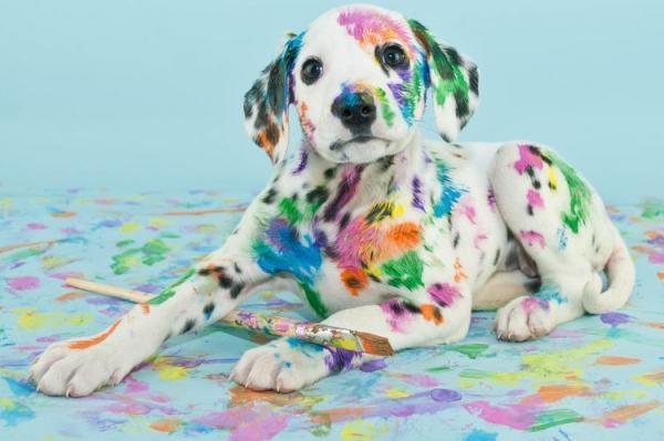 Что делать, если собака съела краску  лак, отправление - Это интересно
