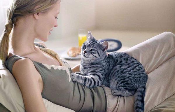 Молочный шаг у кошки: значение, что означает, что это - Это интересно