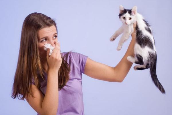 Вакцина от аллергии на кошек  прививка, цена, отзывы - Это интересно