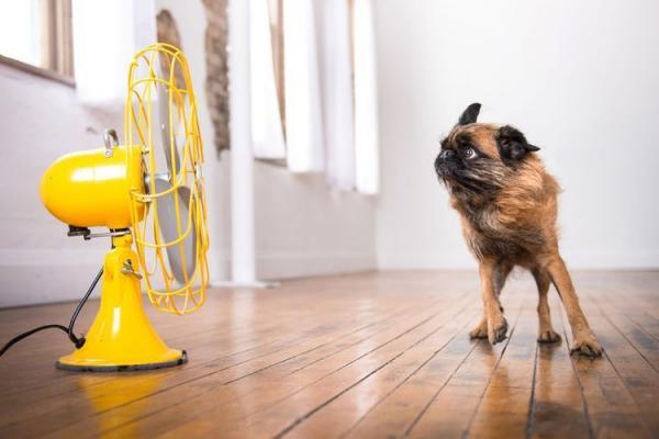 Как охладить собаку в сильную жару  как помочь в жаркую погоду - Это интересно