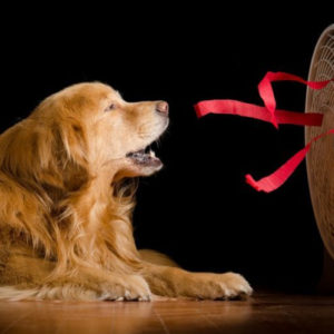 Потеют ли собаки  почему не потеют когда им жарко - Это интересно