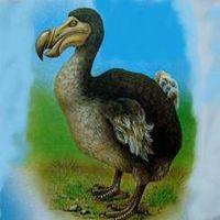 Вымершие животные и птицы - Черная книга России и Мира - описание, фото