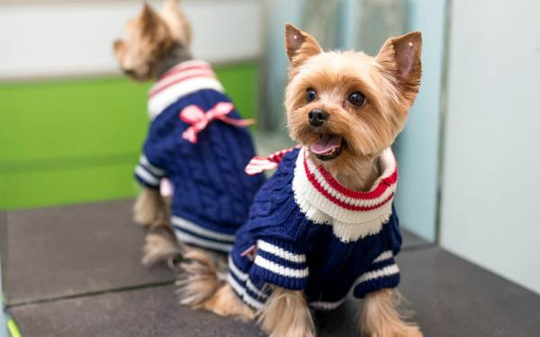 Одежда для собак: нужна ли, зачем - Это интересно