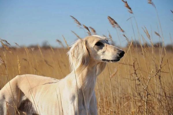 Самая древняя порода собак в мире  на Земле, как называется - Это интересно