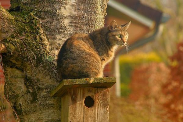 История одомашнивания кошек  происхождение домашних кошек, кратко - Это интересно