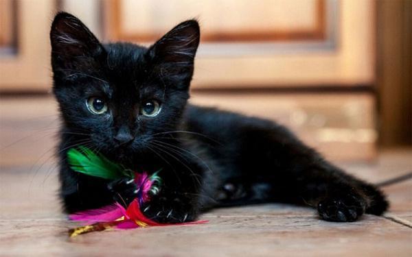 Как назвать черного котенка? - Это интересно