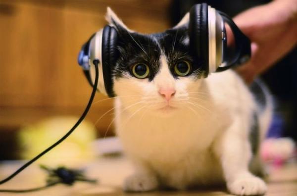 Звуки для кошек: реакция, слушать  приятные, успокаивающие - Это интересно