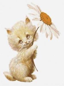 Сказка про котят: Котенок читать с картинками онлайн сказка о животных