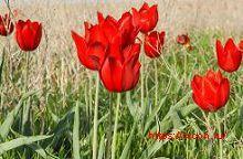 Перечень растений, занесённых в Красную книгу Ростовской области – Красная книга РО – кратко описание, фото
