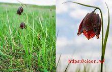 Перечень растений, исключенных из Красной книги Ростовской области – Красная книга РО – кратко описание, фото