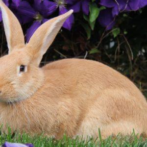 Кролик- краткое описание и фото - для детей