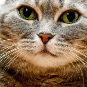 Кошка домашняя- краткое описание и фото - для детей