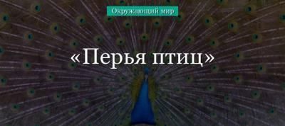 Перо птицы (окружающий мир, 1 класс) в кратком изложении