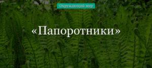 Папоротники – характеристика растения для доклада или сообщения (3 класс, окружающий мир) в кратком изложении