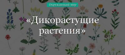 Дикорастущие растения – виды с примерами, их значение и определение кратко в кратком изложении